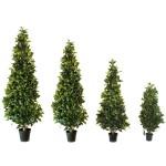 Drzewka, krzewy, trawa, nasiona